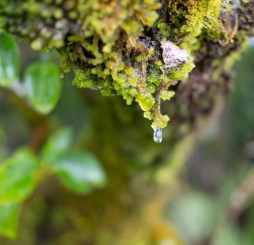 Die regnerische und stürmische Seite Neuseelands ist eine treue Reisebegleitung